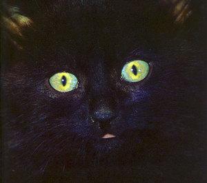 Catb_1